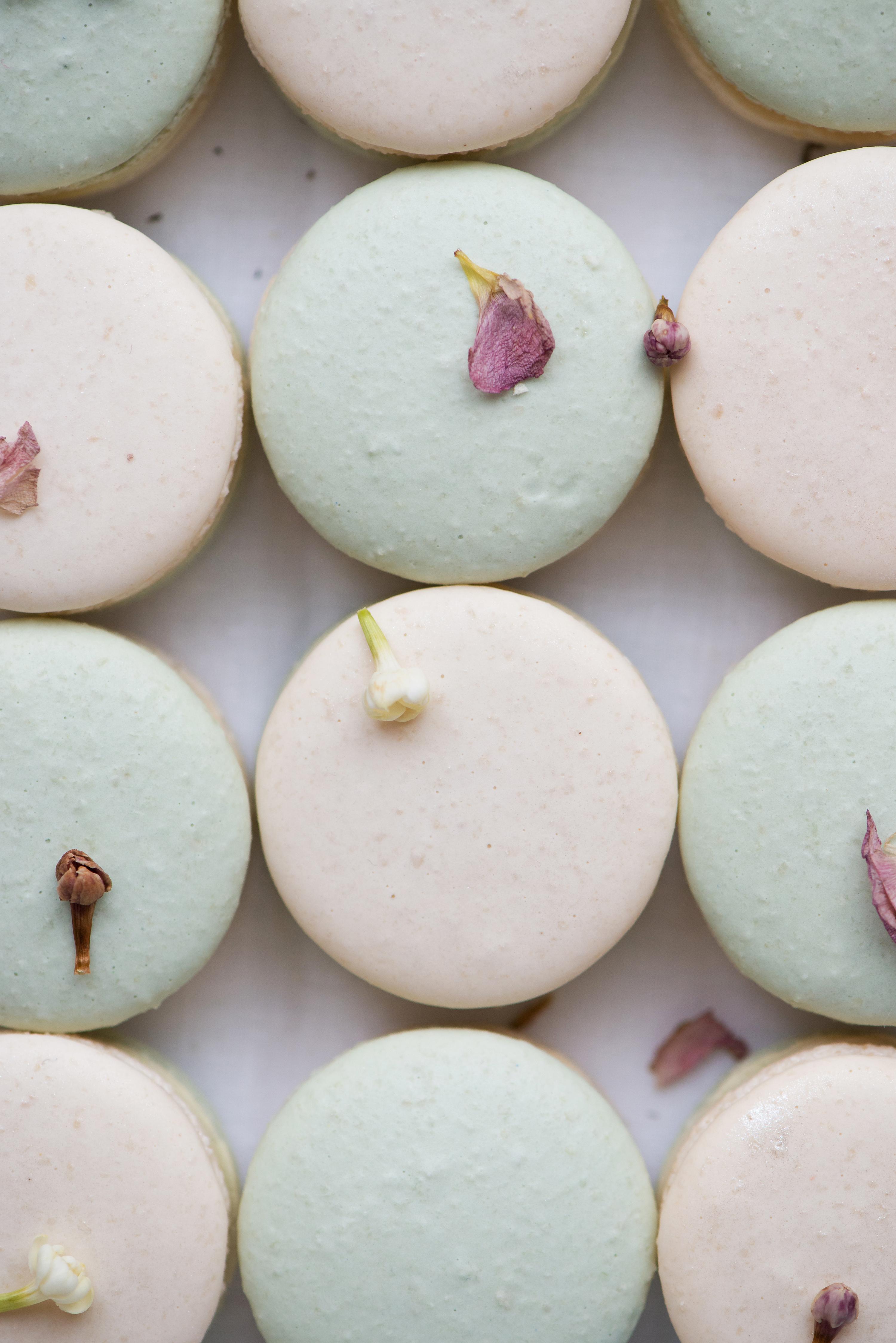 Jasmine Apricot Macaron | Now, Forager | Teresa Floyd Photography
