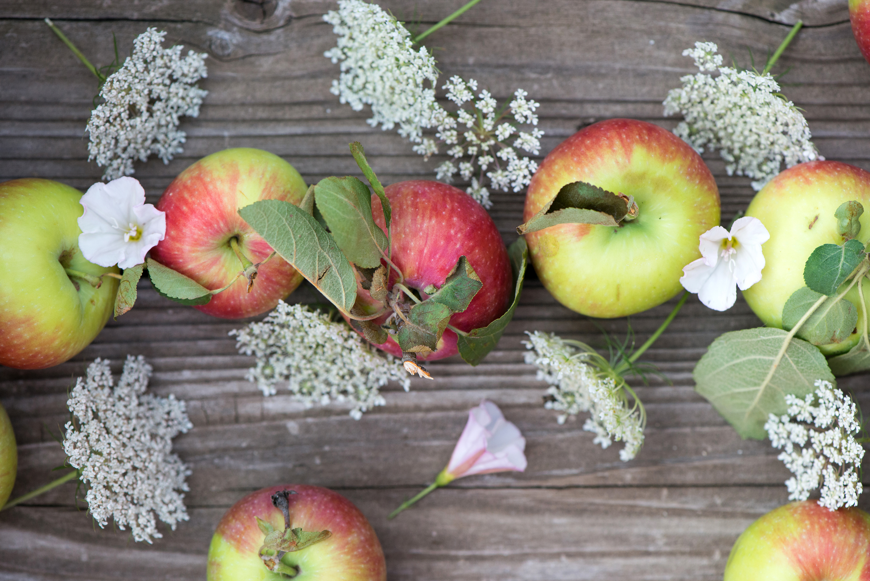 Summer Apples | Now, Forager | Teresa Floyd Photography