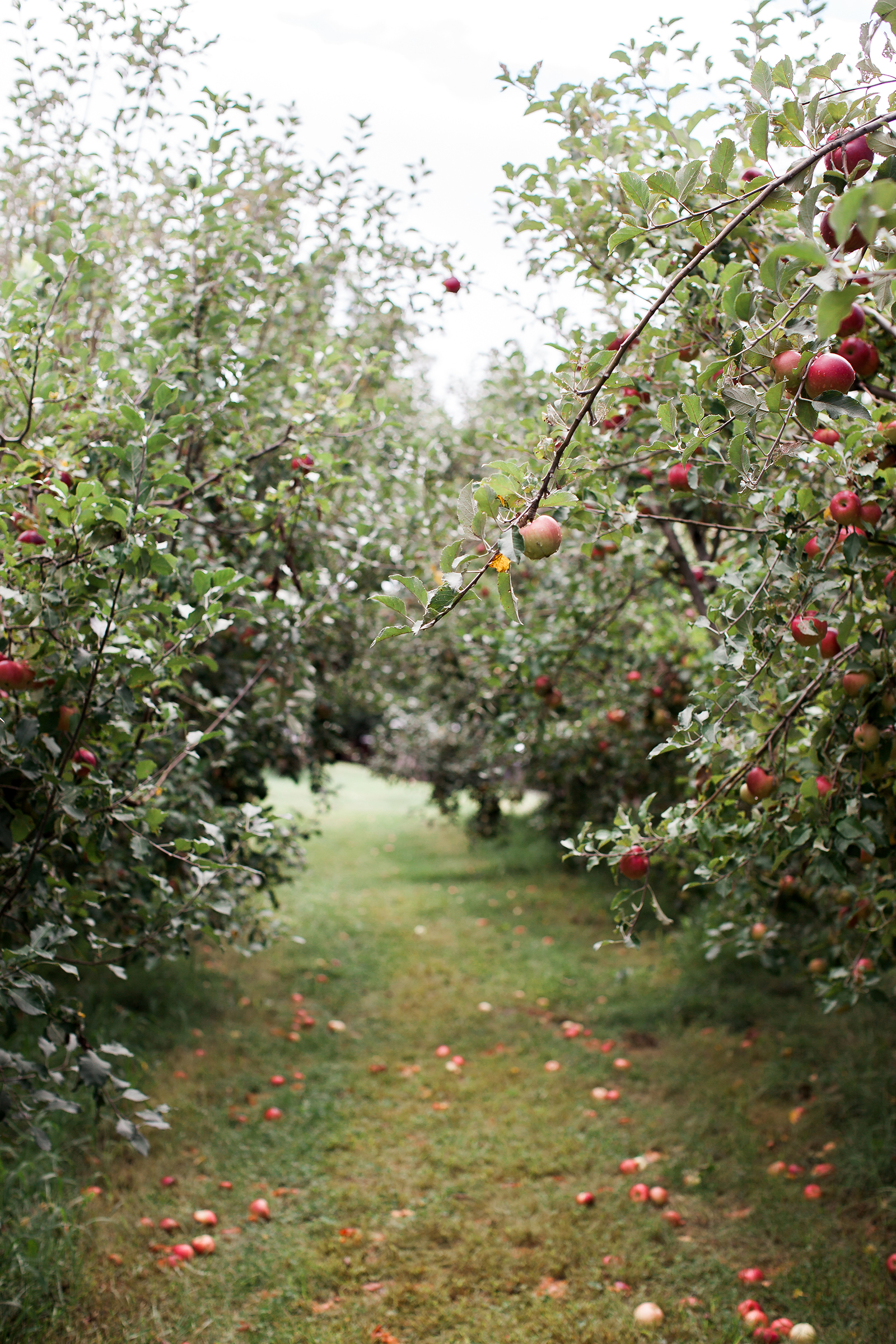 Weston Red Barn Farm Orchard | Now, Forager | Teresa Floyd