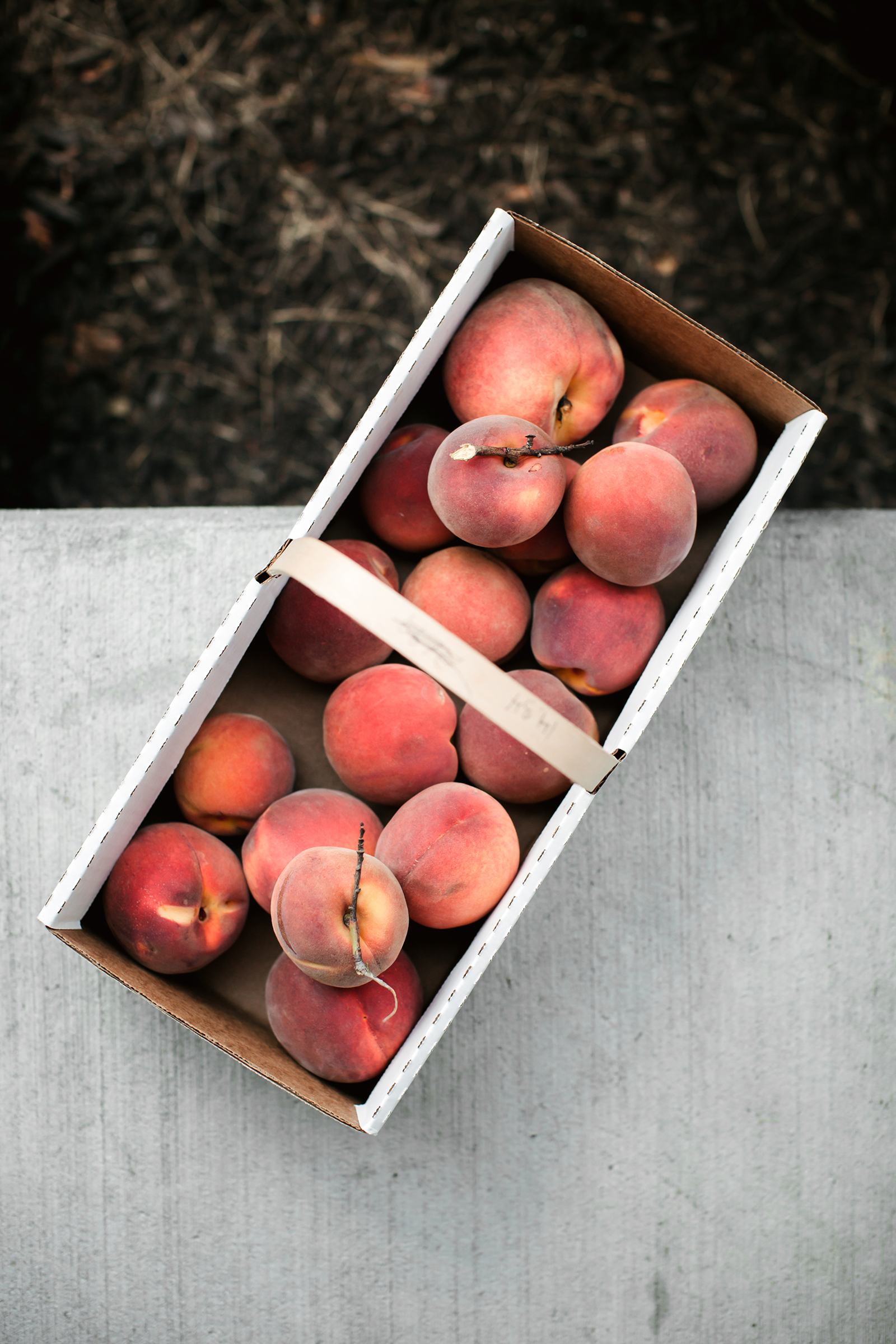 Peach Picking | Now, Forager